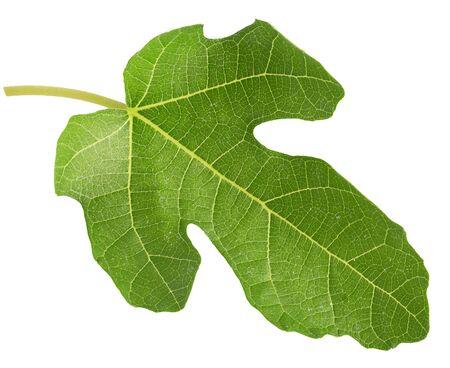 fig leaf isolated on a white background. Zdjęcie Seryjne
