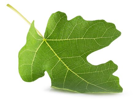 fig leaf isolated on a white background. Stock Photo