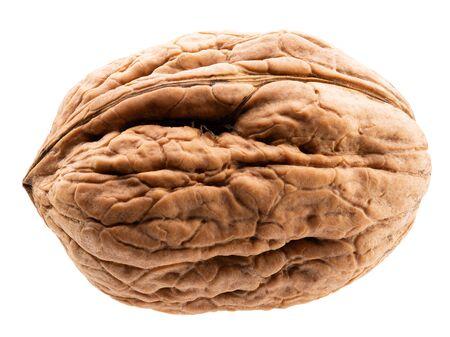 walnut in shell isolated on a white background. Zdjęcie Seryjne