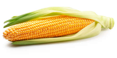 ear corn with husk isolated on a white background.