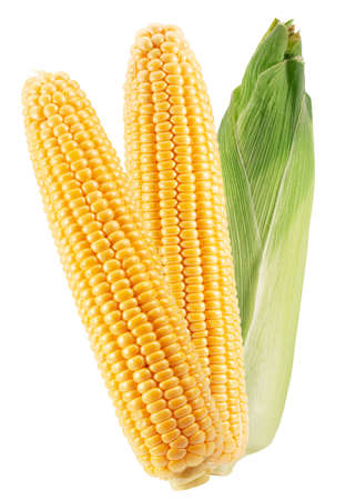 ear corn with husk isolated on a white background. Archivio Fotografico