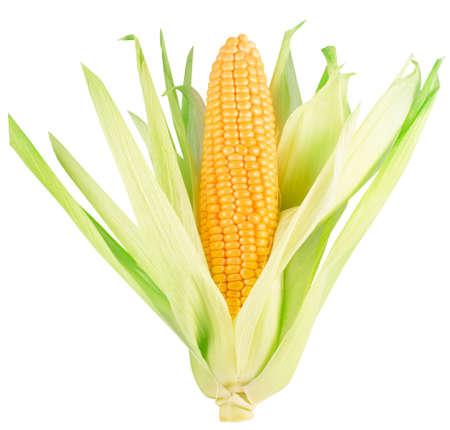 corn ear isolated on a white background. Archivio Fotografico