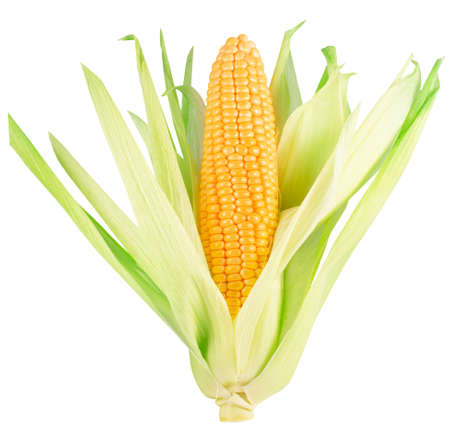 corn ear isolated on a white background. Stock fotó