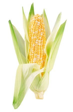 corn ear isolated on a white background.