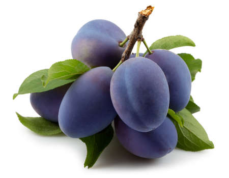 branch with purple plums and green leaves isolated on a white background.