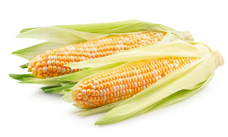 corn ears isolated on a white background. Archivio Fotografico