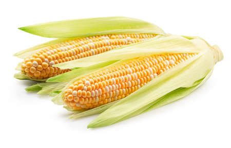 corn ears isolated on a white background. Stock fotó