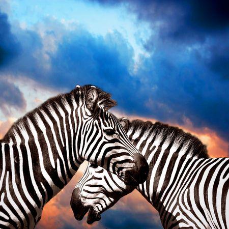 unspoiled: Dos cebras en el cielo