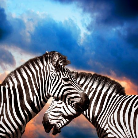 Two Zebras on the sky photo