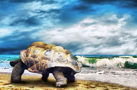 Big Turtle on the tropical oceans beach Stock Photo - 7851409