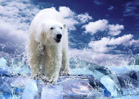 the climate: White Polar Bear Hunter on the Ice in water drops.
