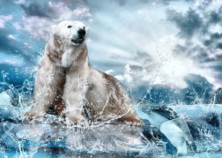 south pole: White Polar Bear Hunter on the Ice in water drops.