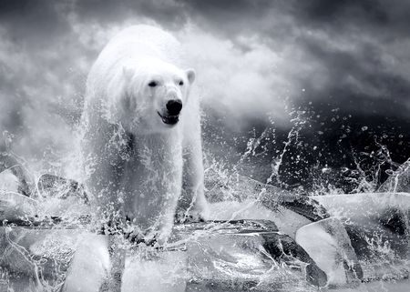 White Polar Bear Hunter on the Ice in water drops. Stock Photo - 7928022