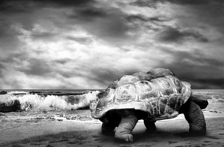 Big Turtle on the tropical oceans beach  photo
