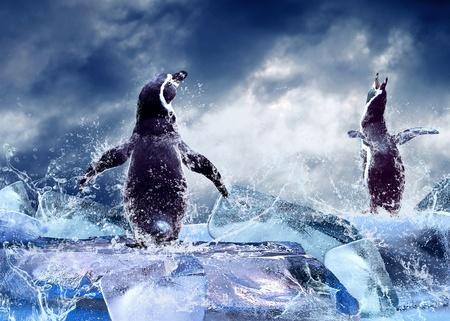 펭귄 물에 얼음 상품. 스톡 콘텐츠