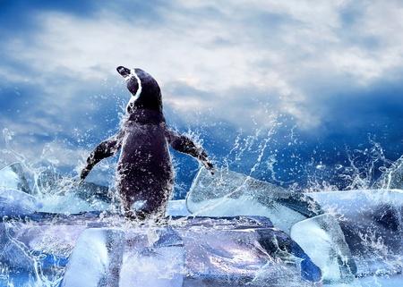 Pingüino en el hielo en gotas de agua.