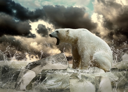White Polar Bear Hunter on the Ice in water drops. photo