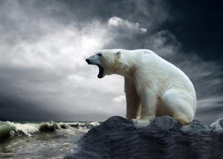 White Polar Bear Hunter op het ijs in het water daalt