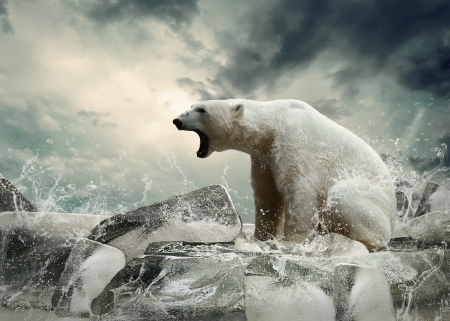 swimming animal: White Polar Bear Hunter on the Ice in water drops.