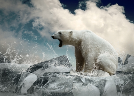 Blanco Polar Bear Hunter en el hielo en gotas de agua Foto de archivo - 20238721