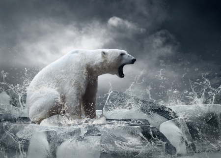 White Polar Bear Hunter on the Ice in water drops  photo