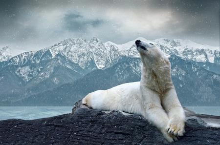 White polar bear on the ice photo