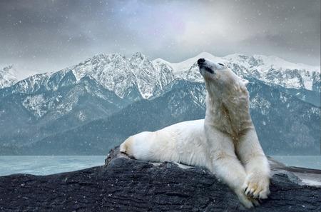 氷の上の白いシロクマ