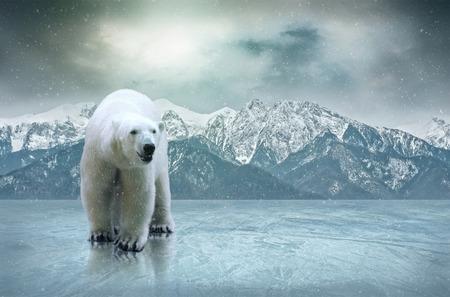 Weißer Eisbär auf dem Eis