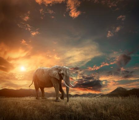 Elefante con troncos y grandes orejas al aire libre bajo la luz solar. Foto de archivo