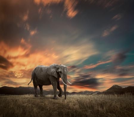 Elefante con troncos y grandes orejas al aire libre bajo la luz solar.