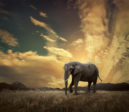 Elephant with trunks and big ears outdoor under sunlight. Reklamní fotografie
