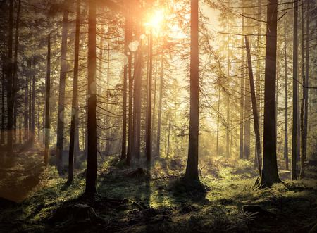 Beautiful forest view at morning. Sun peeps out through the trees with long shadows on the green grass. Stock Photo
