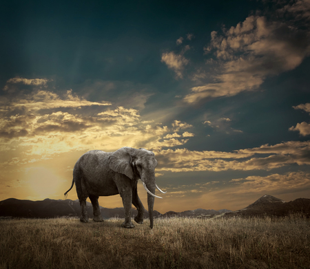 Elephant with trunks and big ears outdoor under sunlight. Stok Fotoğraf