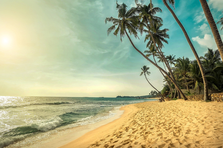 Beautiful sea cost view. Indian ocean costline beach with palms in Sri Lanka under sunlight in summer sunny day. Фото со стока