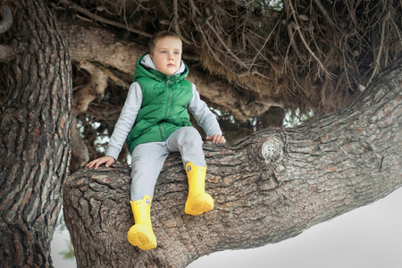 Happy childhood, little boy sit on a tree on a sunny day, family vacations
