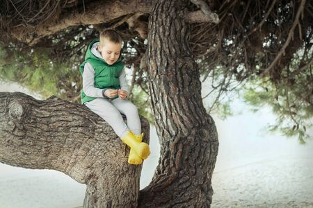 Happy childhood, little boy sits in a tree on sunny day, family vacations