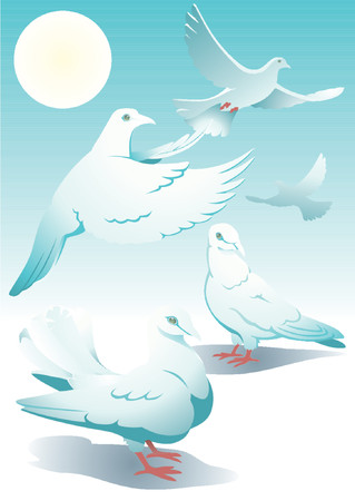 White pigeons on a background of the sky.