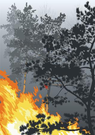 incendio bosco: Legge della natura. Un incendio in un bosco. Vettoriali