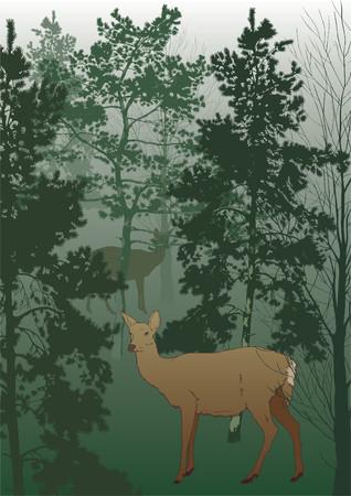 fallow deer: Matutinal mist in wood with deer. Illustration