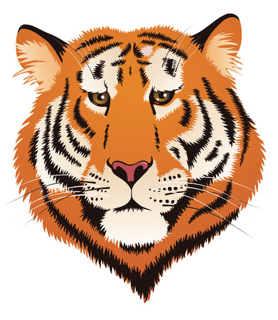 Tiger Head Stock Vector - 6017174