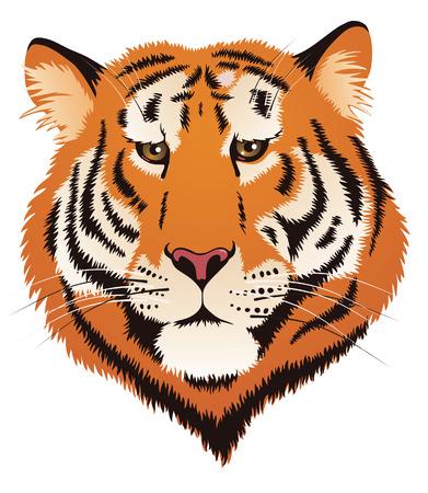 Tiger hoofd