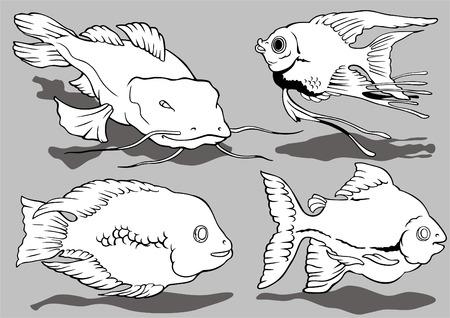 crucian: Amusing aquarian small fishes Illustration