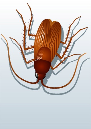 Isolate redhead cockroach on white background. Illustration