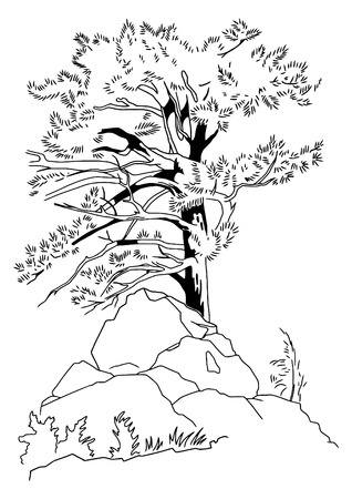The pencil sketch of a coniferous tree Illustration