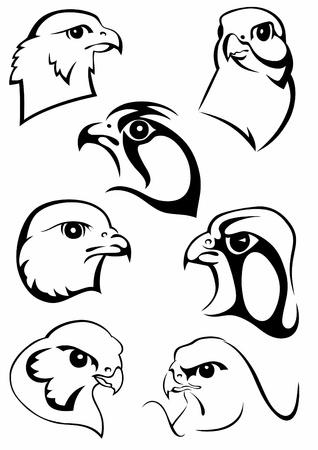 halcones: Conjunto de dibujos originales de aves Vectores