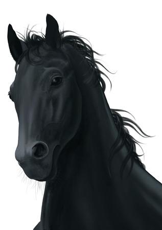 horse background: Black horse head isolated on white background