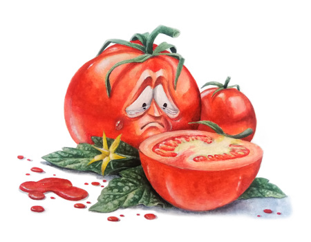 Humorous illustration of the relationship of tomatoes. Watercolor illustration