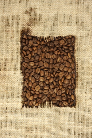 coffee beans and burlap photo