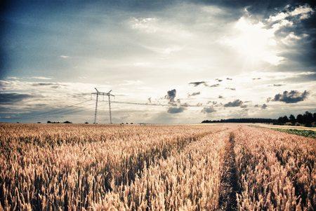 Thunderclounds au-dessus du champ de blé. Champ agricole en été Banque d'images
