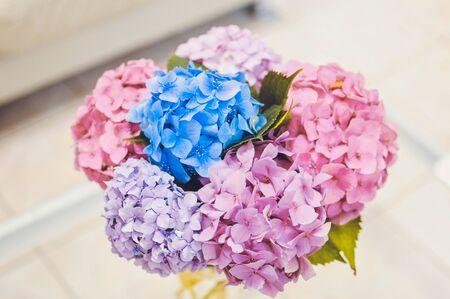 Pink, purple, blue hydrangea top view on white backround Banco de Imagens - 137892132